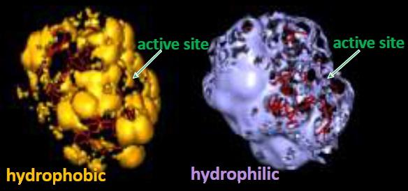 課題の解決方法を提案します★固定化酵素の応用事例のご紹介